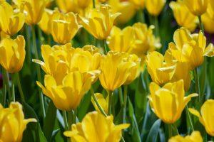 TFI Spring! Fresh start anyone?